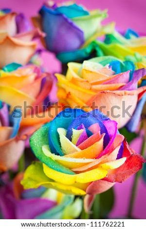 bouquet of multicolored roses (Rainbow rose) - stock photo
