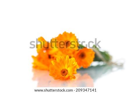 bouquet of orange calendula blossoms on white background - stock photo