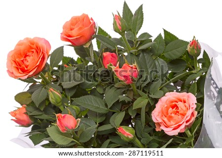 Bouquet of orange roses isolated on a white background - stock photo