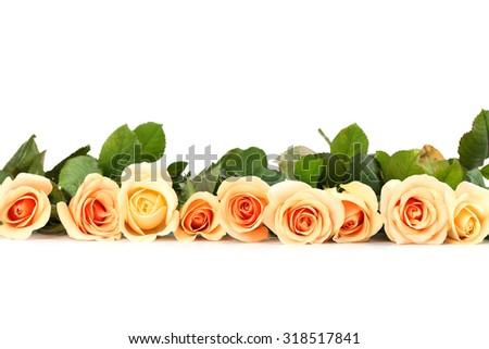 Bouquet of orange roses on white background - stock photo