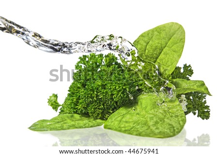 Bouquet of parsley and lettuce isolated on white - stock photo