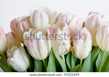 Bouquet of pastel colored tulips with water drops - stock photo