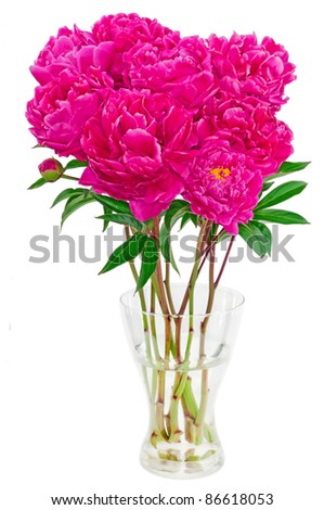 bouquet of peonies on a white background - stock photo