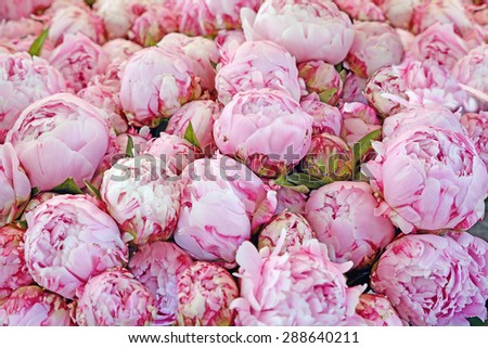 Bouquet of peony flowers on the farmers market, shallow depth of field. Retro vintage instagram filter - stock photo