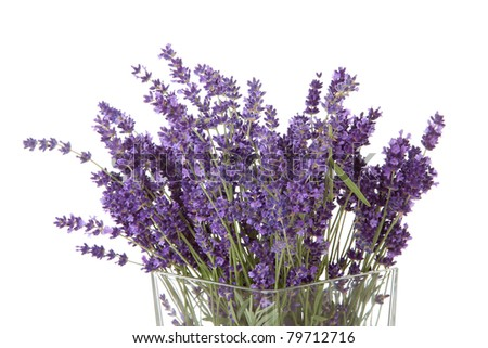 Bouquet of picked lavender in vase over white background