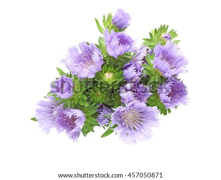 Bouquet of Pincushion flowers in a white background
