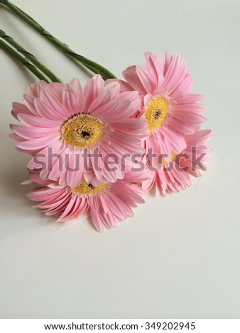 Bouquet of pink and yellow daisies - stock photo