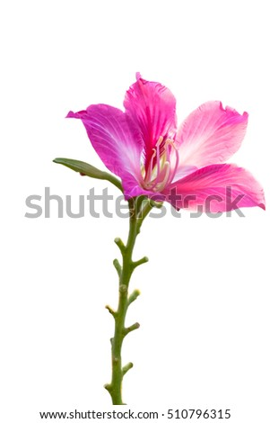 bouquet of pink flower on tree, selective focus