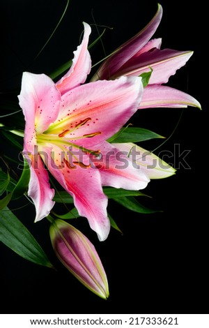 Bouquet of pink lilies with white-pink petals on a black background - stock photo