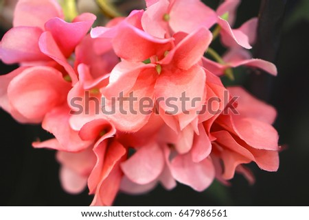 Bouquet pink plastic flowers black background stock photo royalty bouquet of pink plastic flowers and black background mightylinksfo