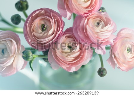 Bouquet of pink ranunculus in vase - stock photo
