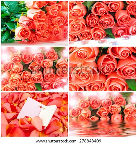 Bouquet of pink roses, card, water, drop, set - stock photo
