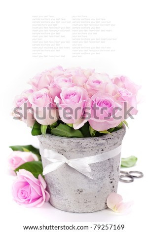 bouquet of pink roses in a pot on the white background - stock photo
