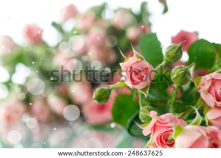 bouquet of pink roses on an abstract background - stock photo