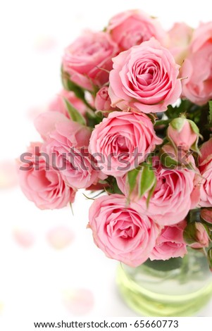bouquet of pink roses on white isolated background - stock photo