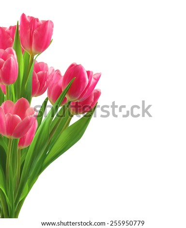Bouquet of pink tulips isolated on white background - stock photo