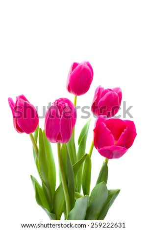 Bouquet of pink tulips on white background
