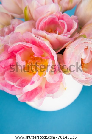 Bouquet of Pretty Pink Tulips in White Vase on Blue Background