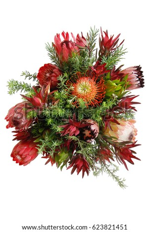 Bouquet of Protea Flowers on a white background with space for text