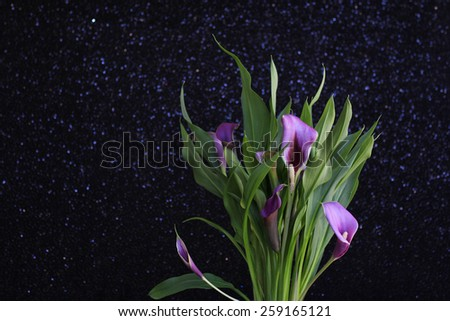Bouquet of purple calla lilies against sequin fabric backdrop - stock photo