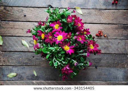 Bouquet of purple chrysanthemum flowers. Colorful pink autumnal chrysanthemum background. Pink Chrysanthemum Flower(Chrysanthemum morifolium). Bouquet of flowers on wood table. - stock photo