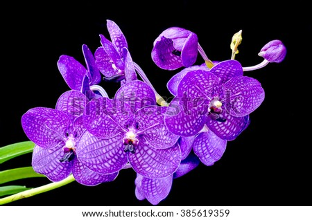 Bouquet of purple orchids.(Vanda) - stock photo