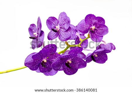 Bouquet of purple orchids.(Vanda) on white background - stock photo