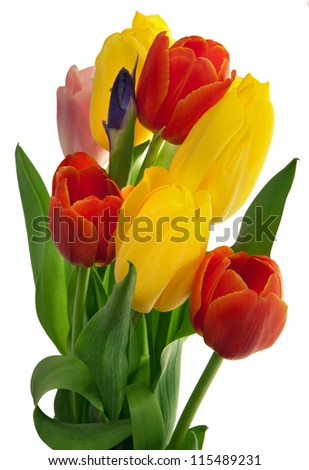 Bouquet of red and yellow tulips isolated on white - stock photo