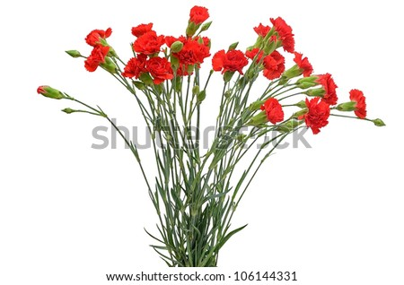 Bouquet of red carnations isolated on white background - stock photo