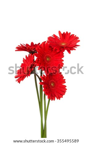 Bouquet of red gerbera flowers on white background