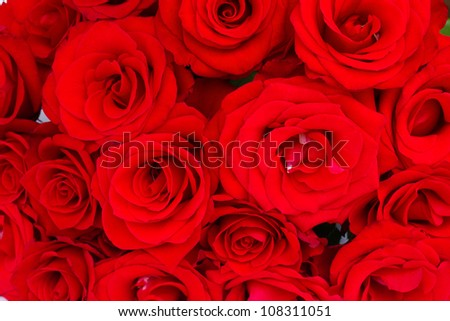 bouquet of red luxury roses close up