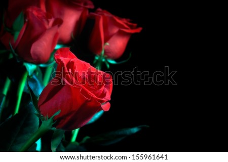 Bouquet of red roses on a black background                     - stock photo