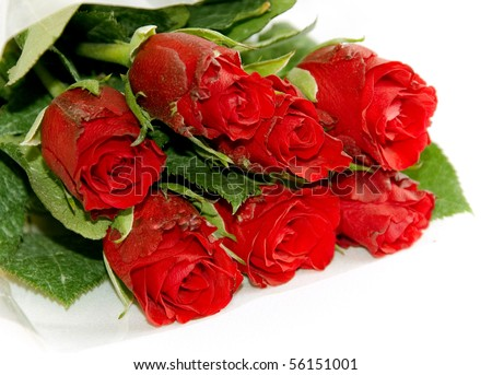 dozen red roses Stock Photos, Illustrations, and Vector Art
