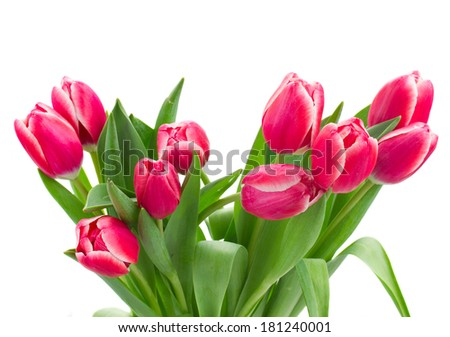 bouquet of red   tulips close up isolated on white background