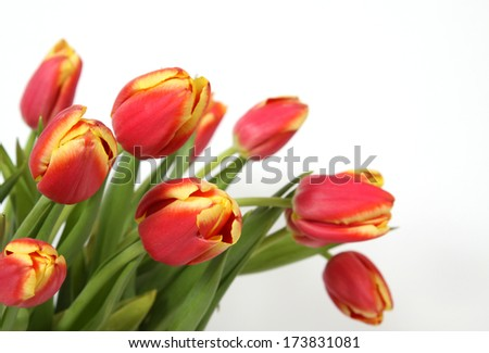 Bouquet of red-yellow tulips - stock photo