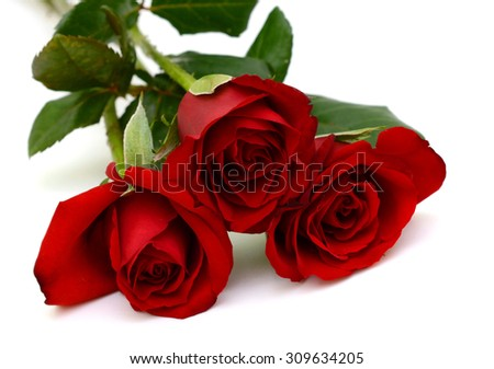 Bouquet of rose flowers isolated on white background