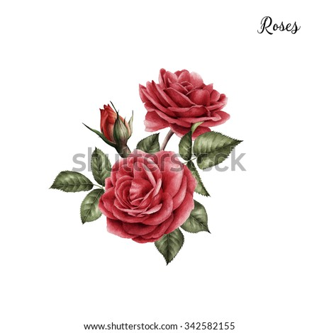 Bouquet of roses, watercolor, can be used as greeting card, invitation card for wedding, birthday and other holiday and  summer background.  - stock photo