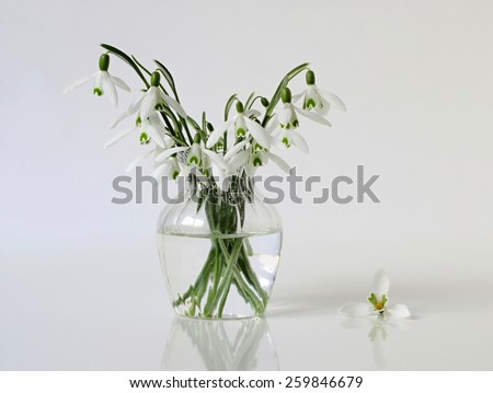 Bouquet of snowdrops flowers in a vase. Still life with bouquet of spring flowers. - stock photo