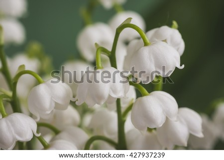 Bouquet of spring flowers lily of the valley.Selective focus