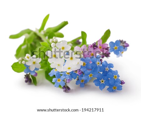 Bouquet of spring flowers on a white background .Forget-me-not.