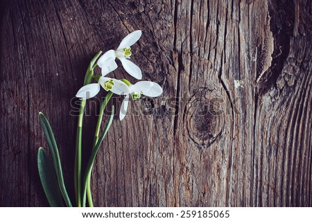 Bouquet of spring flowers snowdrops on old wooden textured board - stock photo