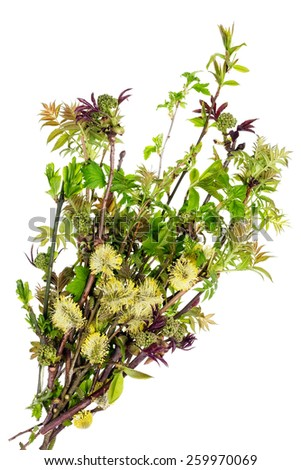 Bouquet of spring green fresh branches isolated on white - stock photo