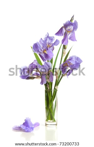 bouquet of spring Irises in a vase isolated on a white background. - stock photo