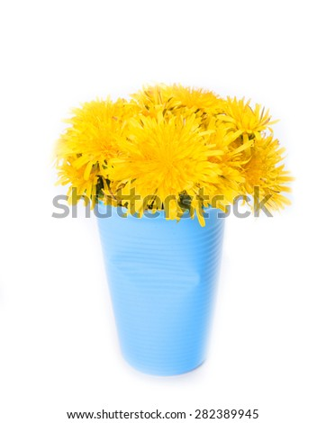 bouquet of summer dandelions isolated on a white background