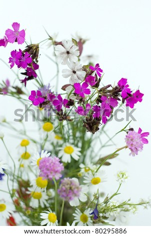 bouquet of summer fresh wild flowers isolated on white background - stock photo