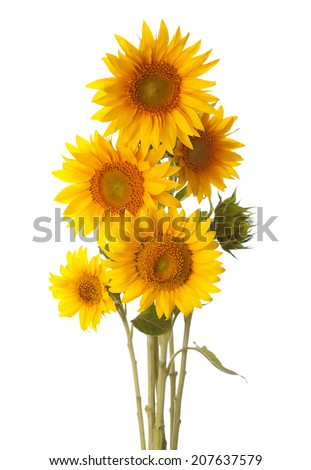 Bouquet of sunflowers isolated on a white background - stock photo