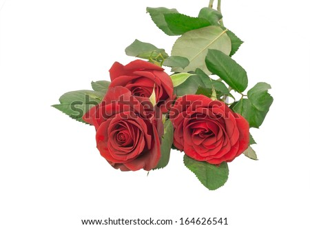 Bouquet of three  red roses on a white background. Isoleted.