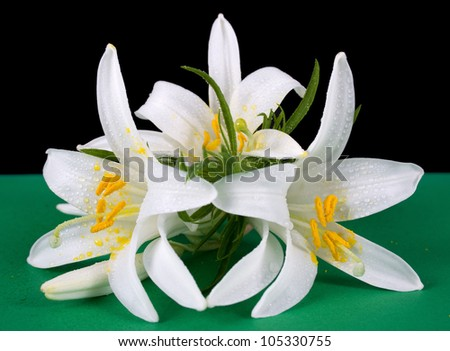 bouquet of three white lilies - stock photo