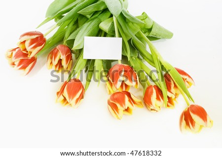 bouquet of tulip with card - stock photo