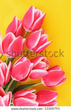 Bouquet of tulips and as a background for  post card - stock photo
